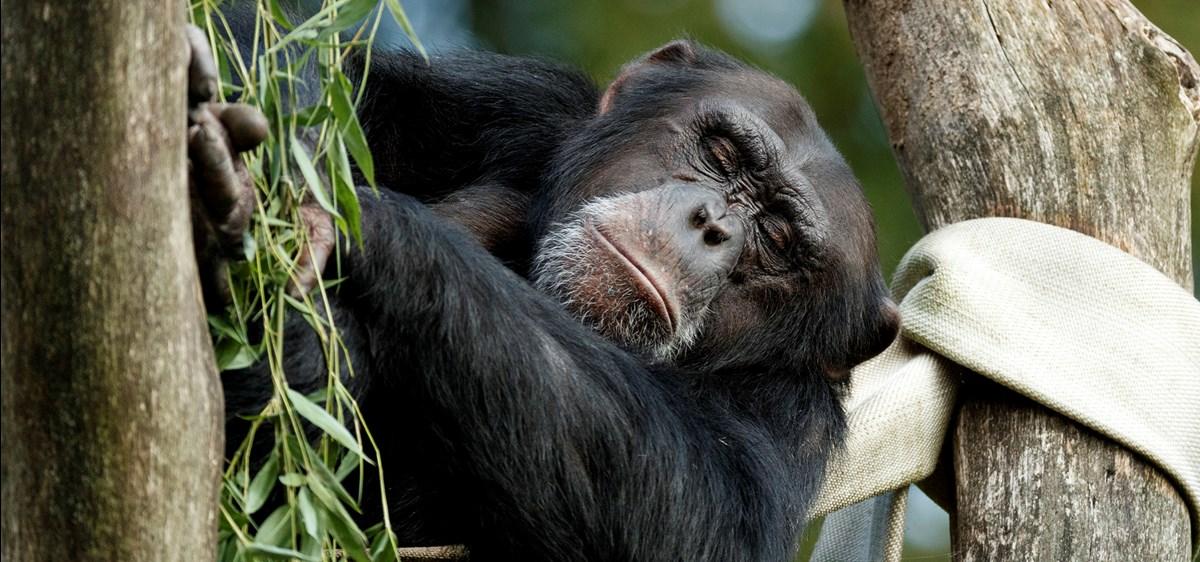 Godnat til dyrene